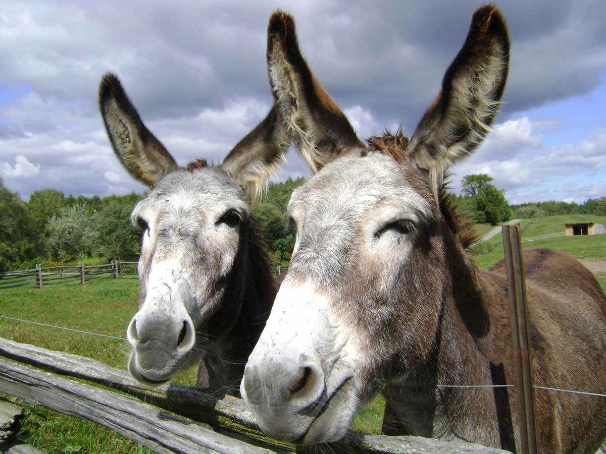 Mothers' Union – The Donkey Sanctuary